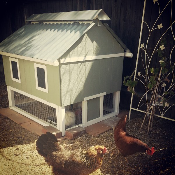 Corrugated Roof on Chicken Coop